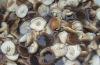 Fresh canned mushroom