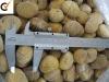 Good quality frozen chestnut kernel
