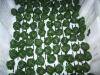Frozen Spinach Balls, Frozen Spinach, IQF Spinach