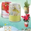 hot-selling gift canned plant- plant in can