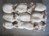 cleaned cuttlefish 30-50g