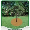 Biodegradable Plantation Coco Discs