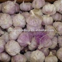fresh garlic price in China
