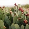 Cactus P.E.
