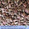 garden pebbles gravel for decoration in gardens