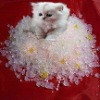 silica gel cat sand interzoo