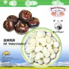IQF Sliced Water Chestnuts frozen water chestnuts frozen vegetables frozen fruit