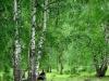 Birch Bark Extract Betulin(CAS:473-98-3) 70%