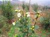 Pure and natural camellia oleifera seed oil