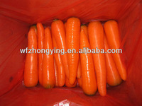 new carrot for sale ---the best selling fresh carrot
