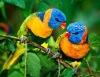 PET 3D parrots poster