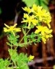 St.John's Wort Extract Powder  -Gao