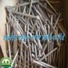 Common Polishing nails (Anping MeiYu WireMesh )