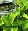 Green Tea Extract 50% Epigallocatechin Gallate (EGCG)