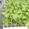 Vermiculite for gardening