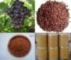 Hot Sale! Pure Nature Grape Seed Extract