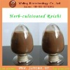 wholesale green products Organic ganoderma powder extract
