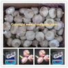 Garlic Market/Fresh Normal White Garlic Packing In 20kg Mesh Bag