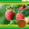 Raspberry Powder Popular in hot weather