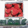 DIP346 Full Color P10 Outdoor LED Display With 1R1G1B Pixel