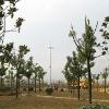 50kW full permanent magnetic suspension wind generator