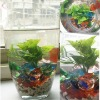 color glass for aquarium
