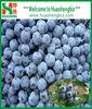 2012 new crop IQF wild blueberries