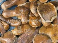 Brined wild Boletus edulis