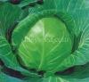 Sheng Gan No.1 cabbage seed