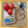 Portable electronic scale