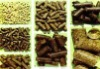 Biomass wood pellets