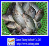 Full Cleaned Frozen Whole Black Tilapia