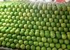 organic pomelo&fresh pomelo & honey pomelo for sale