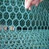Hexagonal Hole Plastic Net