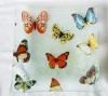 printing glass plate