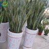 foliage plants for sale