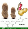 best price of peanut shell extract/Luteolin powder