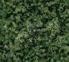 Jiangxi green