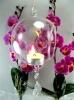 Transparent Hanging Glass Vases