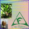 Turmeric Root-tuber
