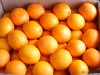 fresh neval orange