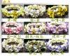 promotion new style hawaii flower bracelet