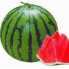 Sweet Baby Mini-Seedless watermelon seed