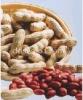 Sheng Yuan Si Li Hong Peanut Seed
