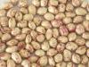 Light speckled kidney bean