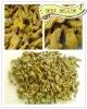 Curcuma Turmeric
