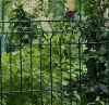 sell electro galvanized Wire mesh fence(factory)