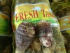 Taro Fresh, China Eddo Roots 2012 New crop fresh taro