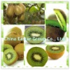 1-MCP,1-methylcyclopropene ethylene prohibitor for kiwi fruits