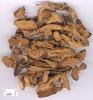 Fortune'S Drynaria Rhizome Extract